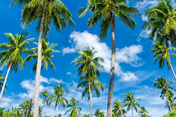 Tropical paradise background. Palmtrees and blue sky at summer