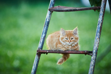 Beautiful ginger kitten sitting on ladder/Cat is looking forward. Photo in the street. Green background