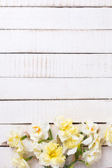 Border from  yellow narcissus flowers   on white painted wooden