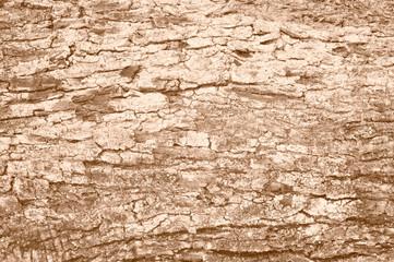 corteccia di un albero di olivo, tono seppia, close up