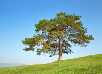 Tree in the field among the hills against the clear blue sky
