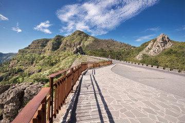 Rain forest in Garajonay national park , La Gomera, Canary islands,  Spain.
