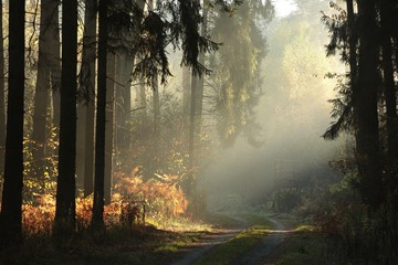 Papiers peints Forets Country road through the autumnal forest on a foggy morning
