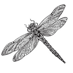 Hand drawn dragonfly in zentangle style