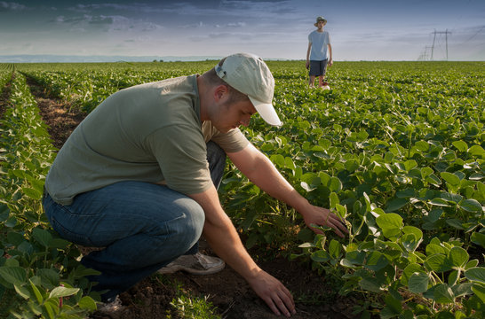 Young farmers on soybean field