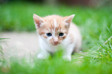 New born kitten sitting on the grass looking sad and lonely