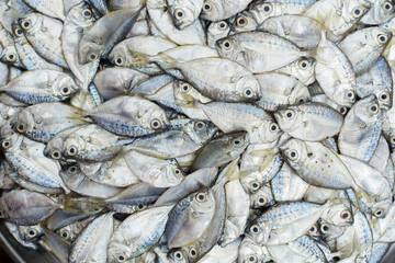 fish for sell at the market