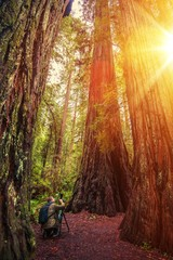 Nature Photographer in Redwood