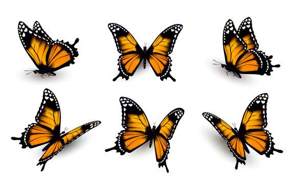 Six butterflies set. Vector.