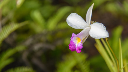 colorful soft pink orchids on a hanging ceramic pot under natura