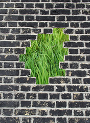 Opening in a brick wall, green grass