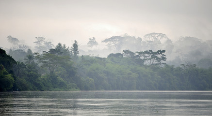 Sangha River. Morning fog on the African river Sangha. Congo.