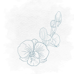 Orchid hand drawing on vector art