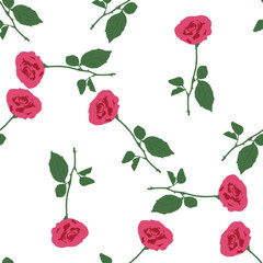 Pink roses on the white background.