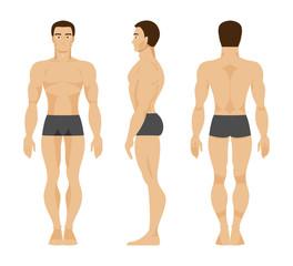 Male anatomy. Vector Illustration