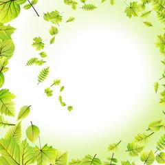 Green leaves frame isolated on white. EPS 10