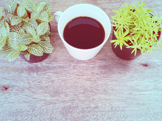 coffee and small plant