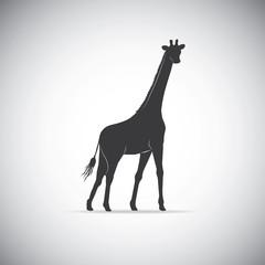 Silhouette of a giraffe