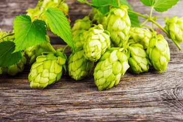 Green hop cones on a wooden table.