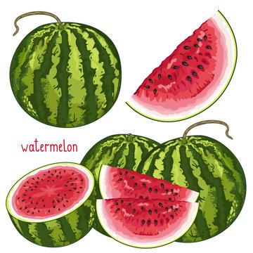 Watermelon Isolated, Vector.