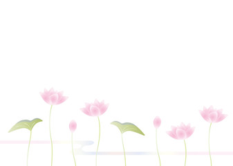 ピンクの蓮の花