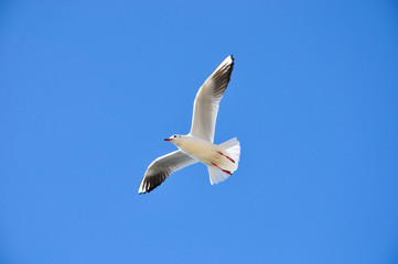 The beauty of the sea gull