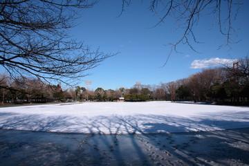晴れた日の都内の公園の雪景色