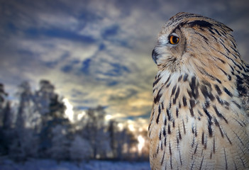 Fotoväggar - large owl near winter forest