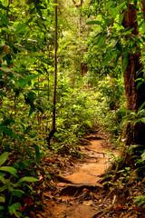 rainforest path at Mossman Gorge, Daintree National Park, Queensland, Australia