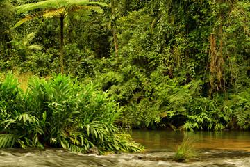 Wooroonooran National Park, Queensland, Australia