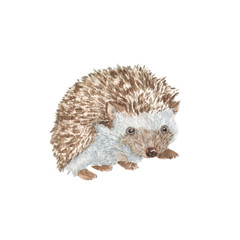 Hedgehog/ Watercolor painting. Can be used for postcards, prints, paper wrapping and design