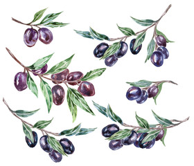 Watercolor black olive branches. Vector illustration.