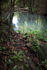 Forest. Jungle tropic rain forest photography. Scenic nature background