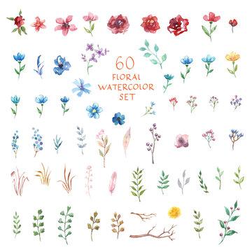 Floral watercolor set. Different vector elements.