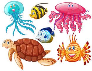 Various kind of sea animals