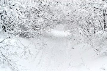 The road in the snow with trees
