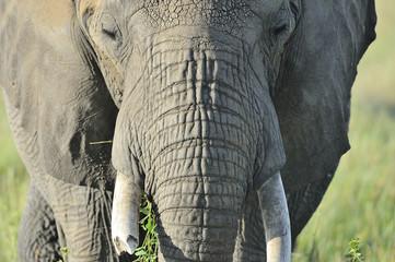 Tanzania Parco Serengeti elefante