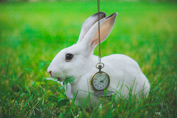 Rabbit with clock Alice in Wonderland