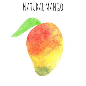watercolor mango fruit on white background