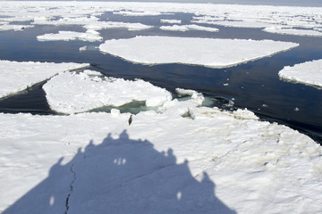 Shadow of cruise ship jamming ice floe with adelie penguin.