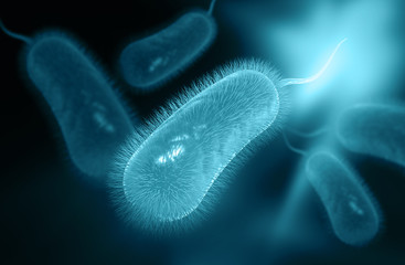 Helicobacter pylori Bakterien Diätbehandlung