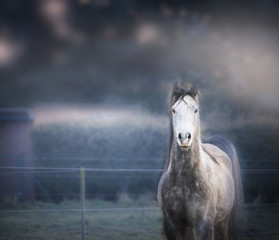 Gray horse on dark nature background
