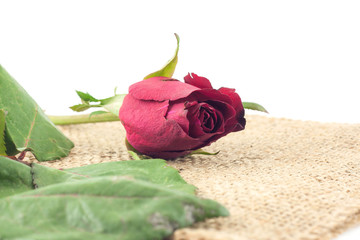 Red rose on sackcloth white background.