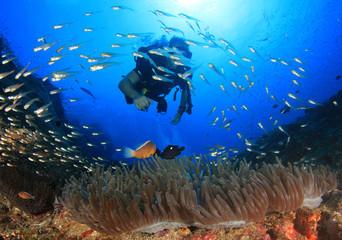 Scuba diving underwater coral reef sea ocean