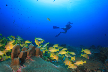 Scuba diving underwater coral reef sea ocean