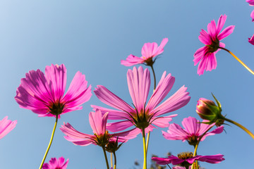 Flowers in the garden with blue sky and clouds background in  soft focus.