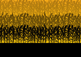 Corn field abstract rural autumn biomass biofuel vector