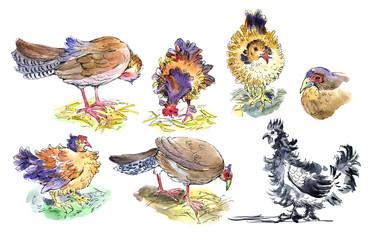 chickens, pheasants, watercolor