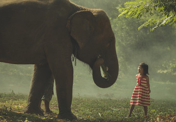 Elephant with children