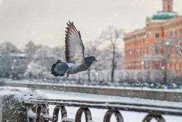 Зимний город и голуби